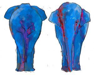 Elefantes en un carro de dos puertas